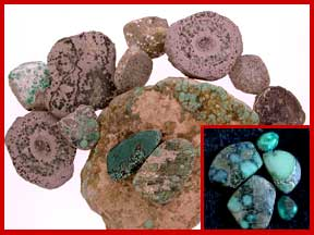 Miss Moffet Psuedomorph turquoise clams, turquoise rough, turquoise cabochons and turquoise facts